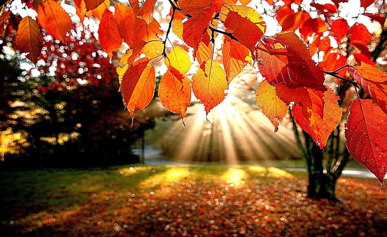 Fall Wallpaper Desktop Cool HD Wallpapers 1324x810
