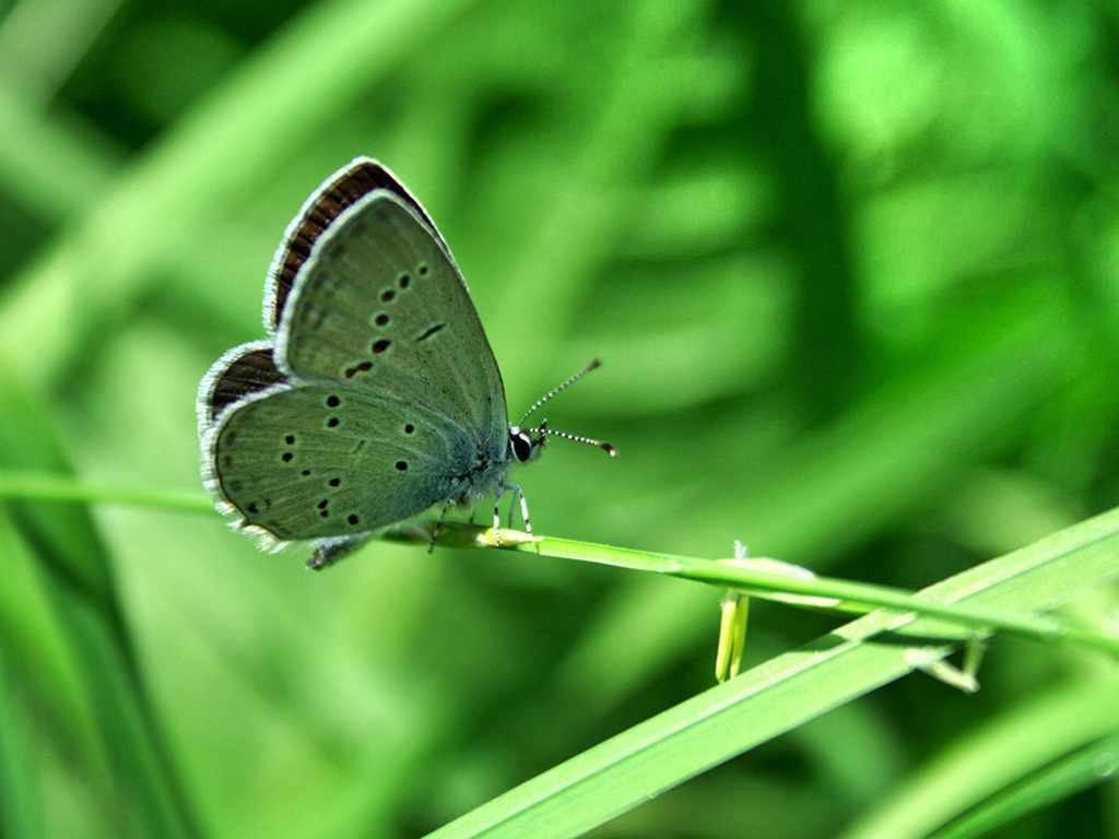 Gallery Wallpaper Green Butterfly Wallpapersafari