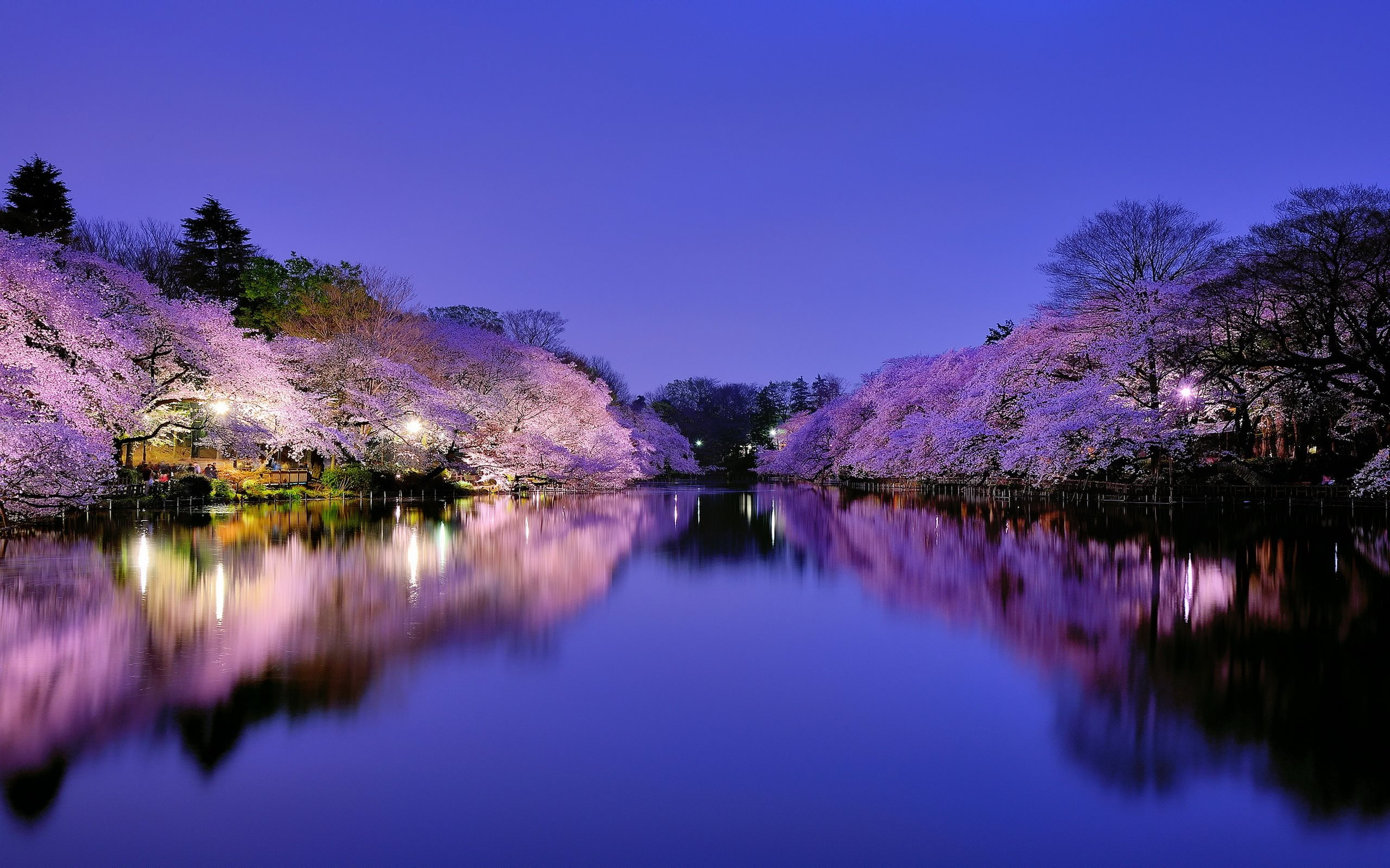 Japan Wallpapers Best Wallpapers 2560x1600