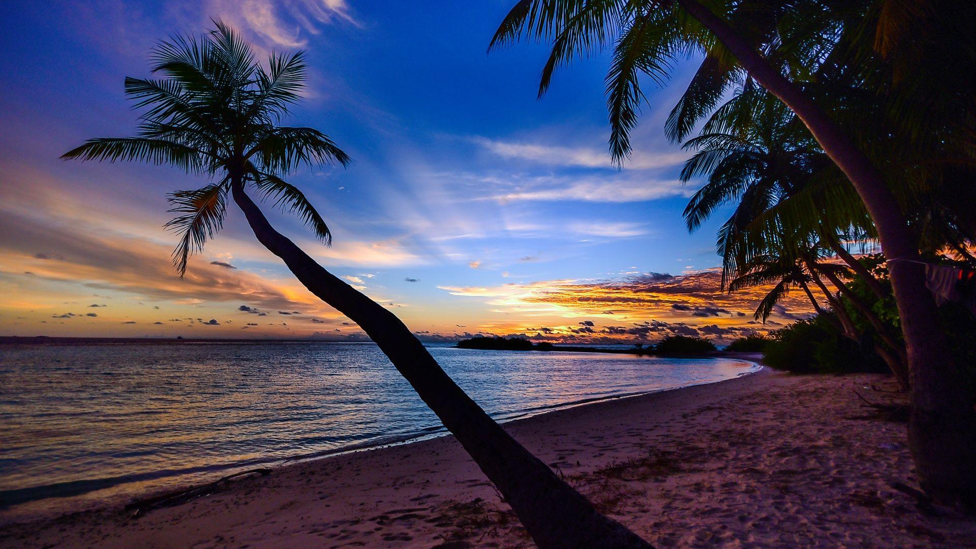 Beach Sunset Desktop Background   Palm Trees Laptop Background 1920x1080