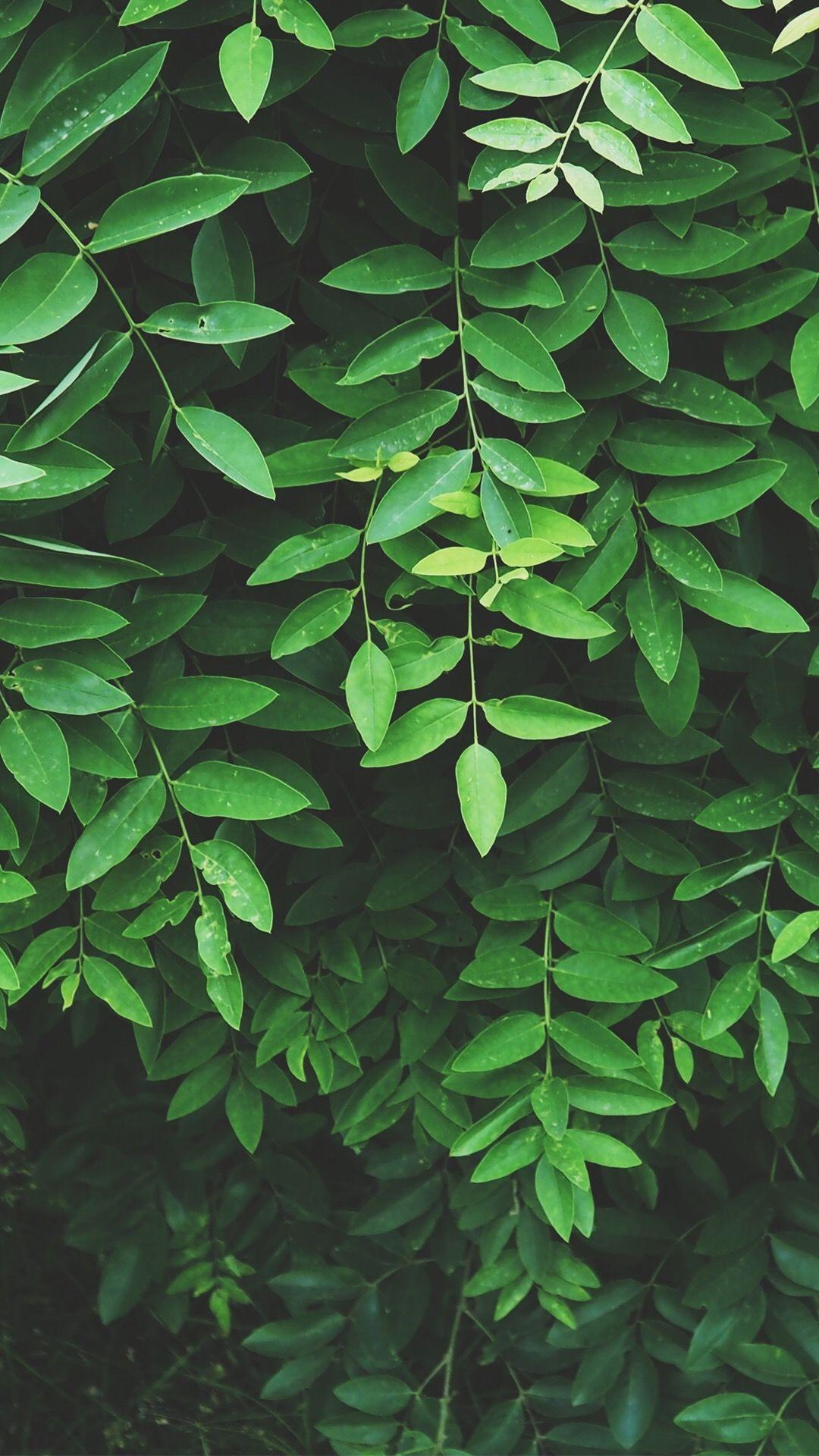 16+ Green Aesthetics Wallpapers on WallpaperSafari