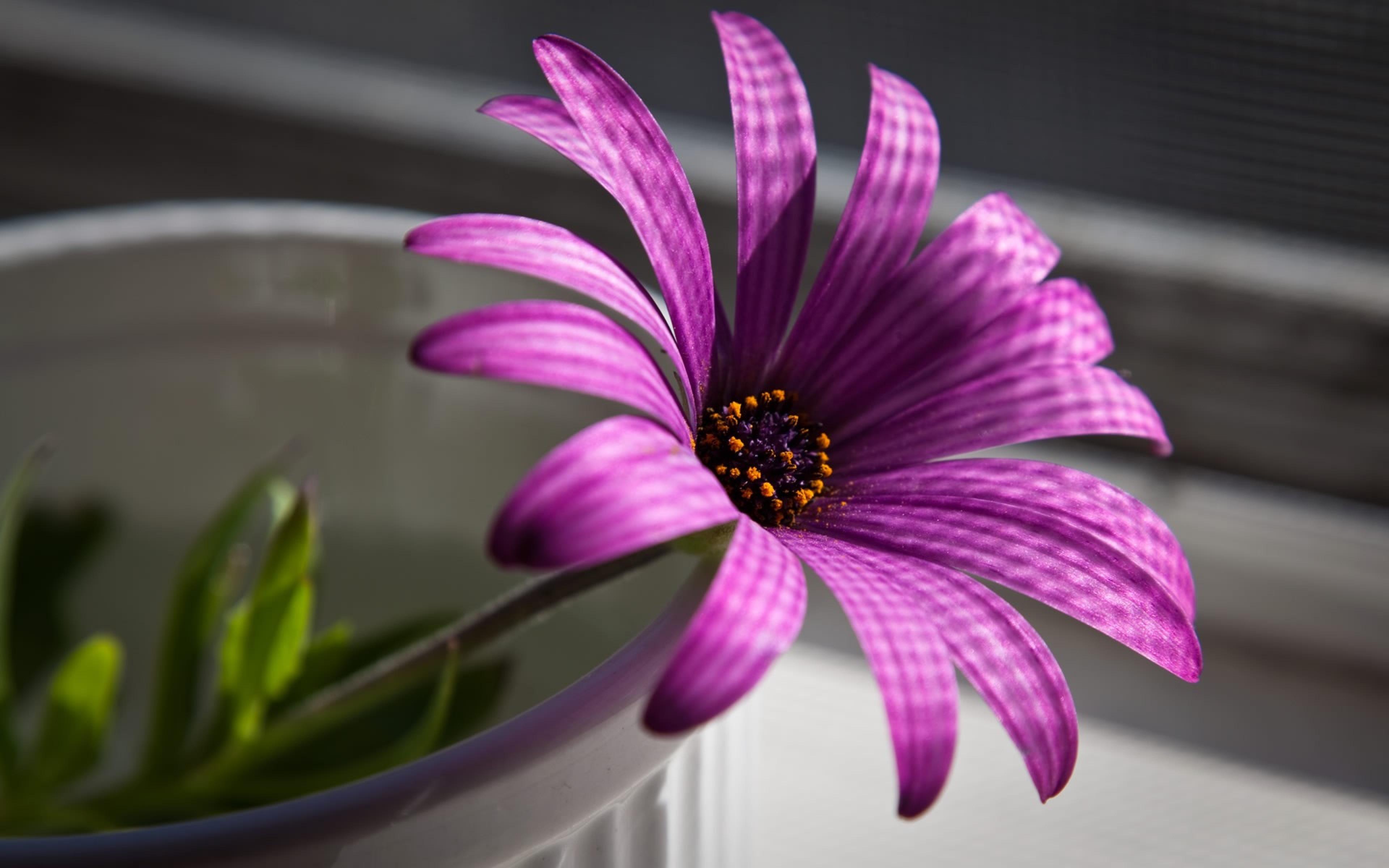 цветок фиолетовый  № 814191 без смс