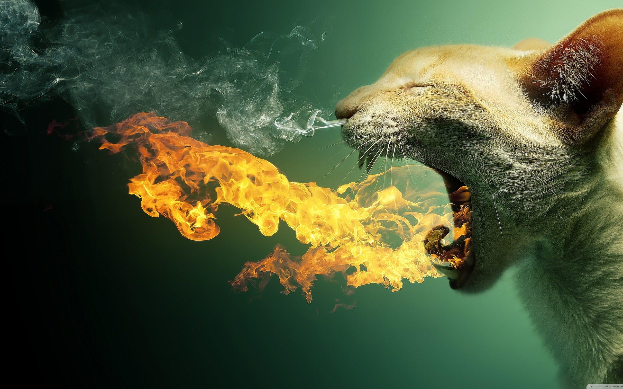 Flaming Cat Funny Creative Animal Wallpaper HD Wallpapers 2560x1600