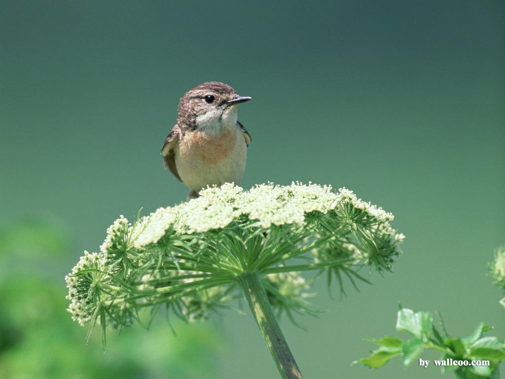 Birds Wallpaper   Lovely Bird in Spring Vol1 1024x768 NO9 Desktop 1024x768