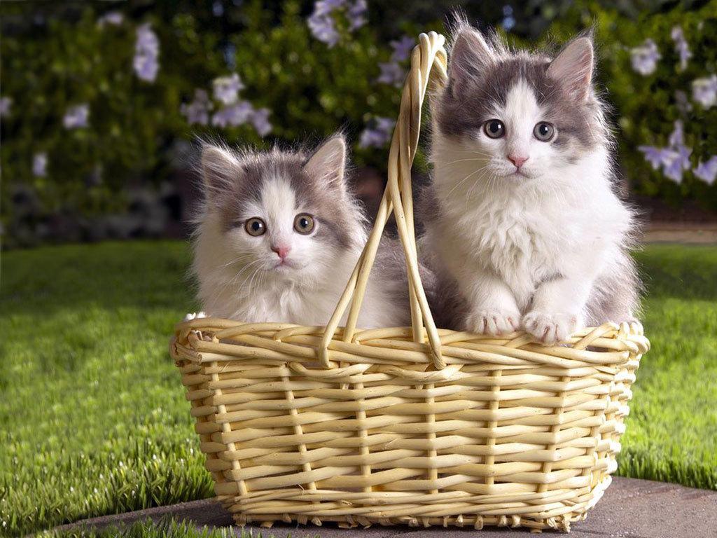 Kittens   catsparrots and butterflies Wallpaper 22814250 1024x768