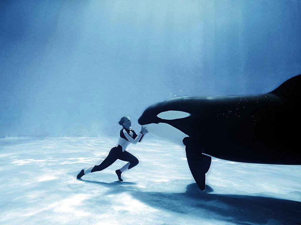 Humpback whale photo Humpback whale wallpaper 1024x768