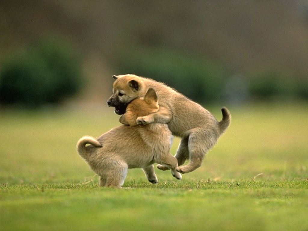 Cute Animal Friendship Wallpapers With Quotes QuotesGram 1024x768