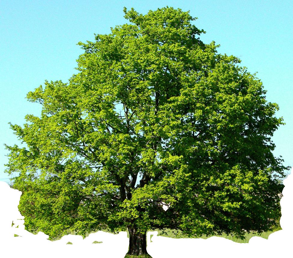 Tree Downloads 975x860