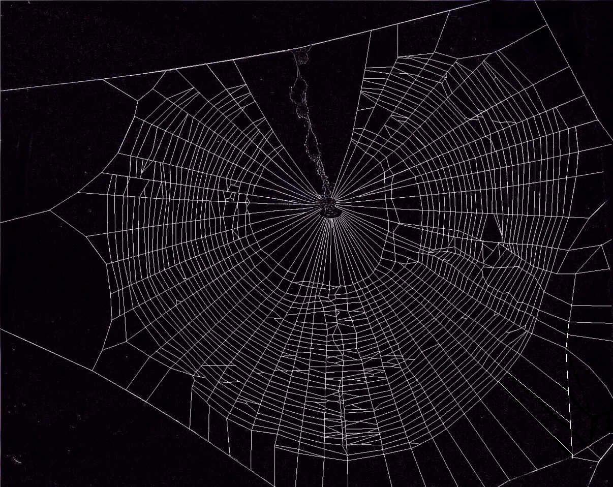 Spider Wallpaper 1206x958