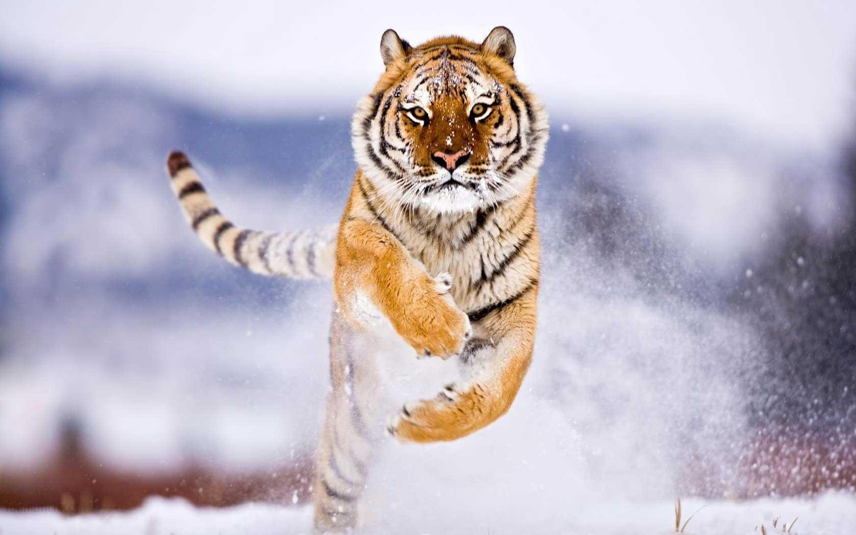 Animal Wallpapers   Top Animal Backgrounds   WallpaperAccess 1680x1050