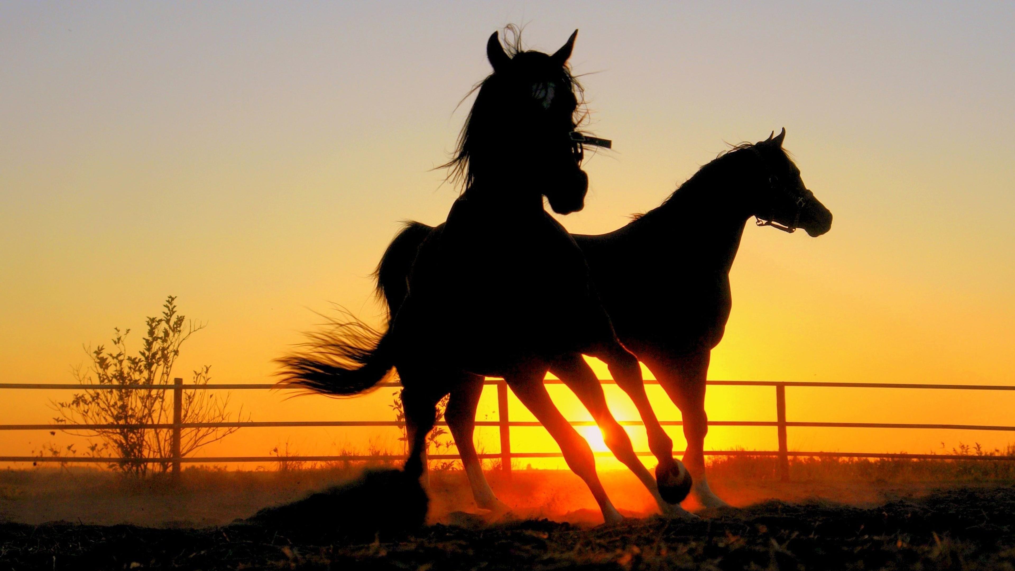 Black Horse Desktop Wallpapers 3840x2160