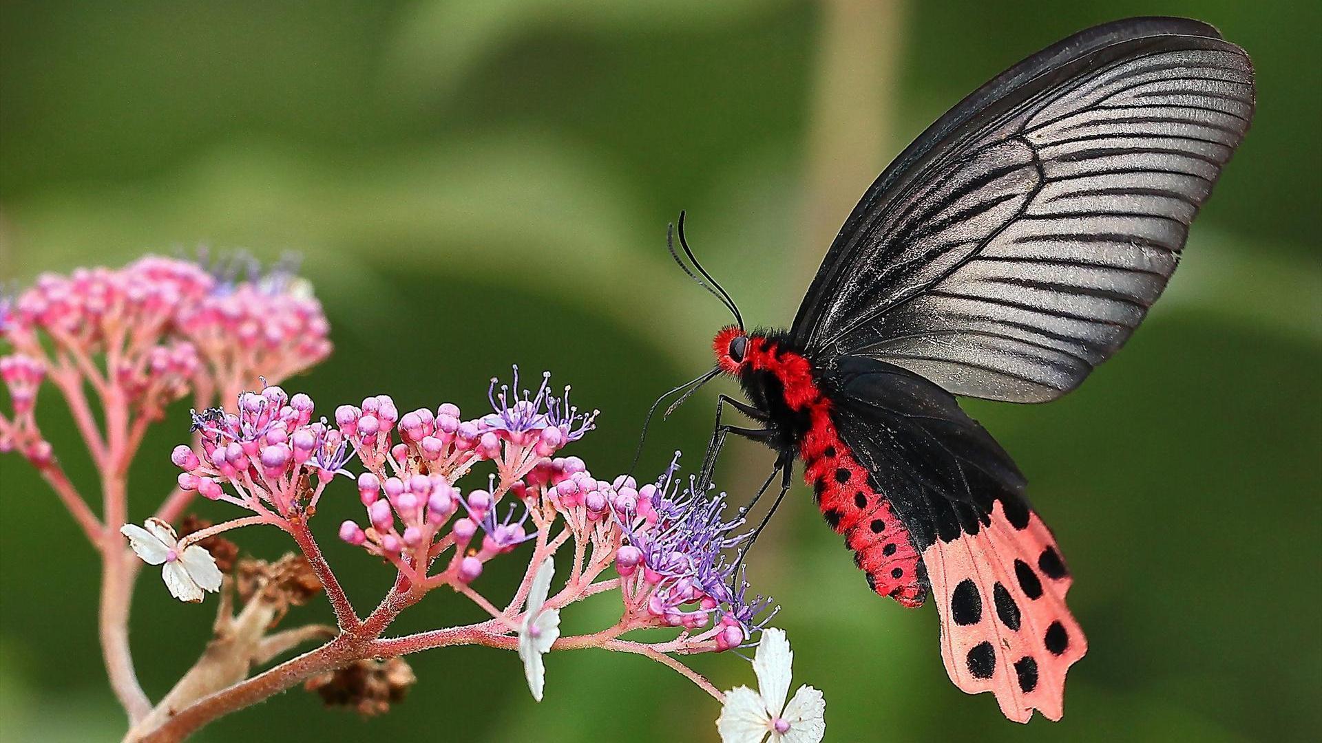 [39+] Pink Butterfly Wallpaper Flower on WallpaperSafari