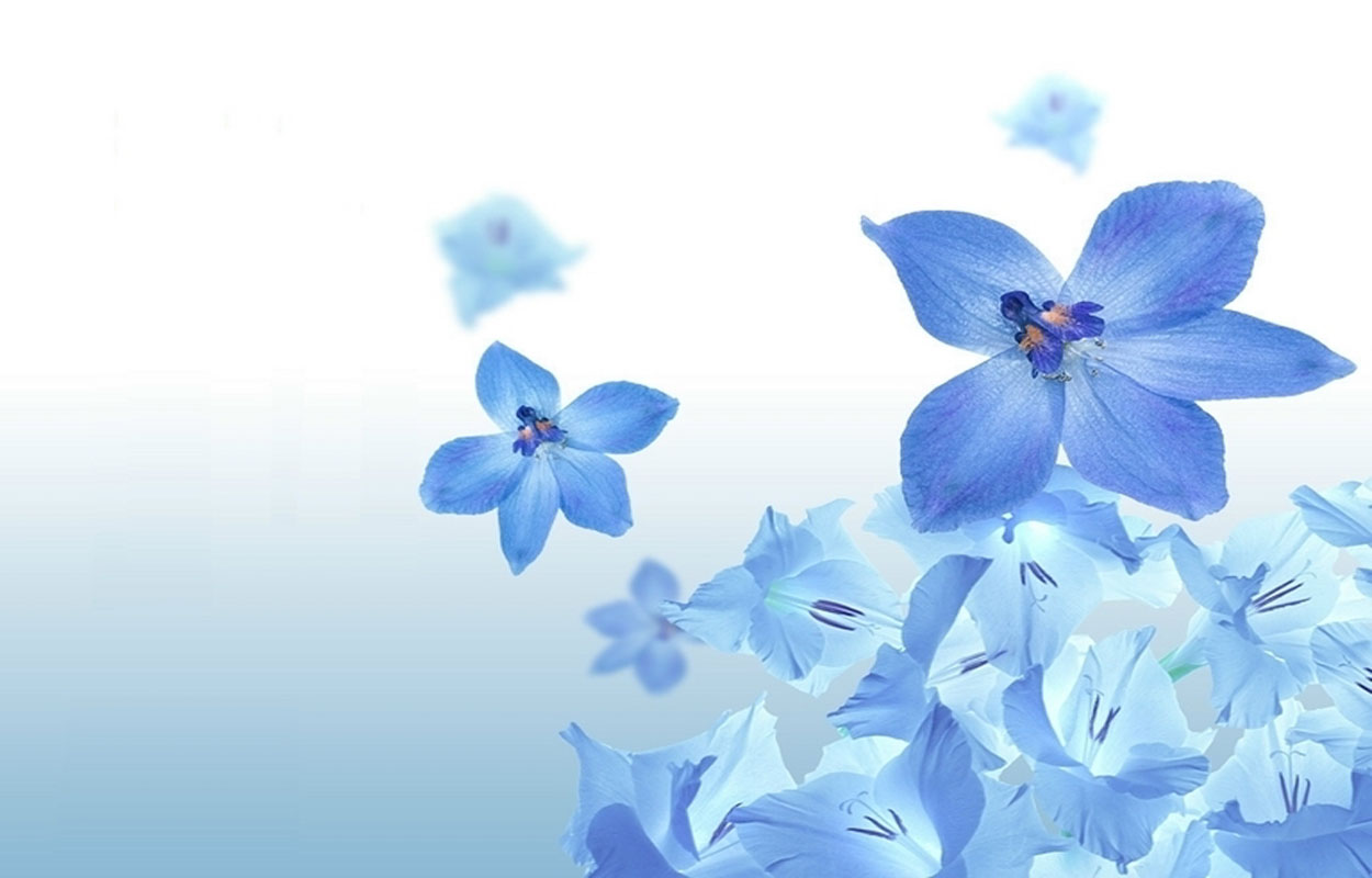 Moons Flower Blue Flower Wallpaper 1250x800