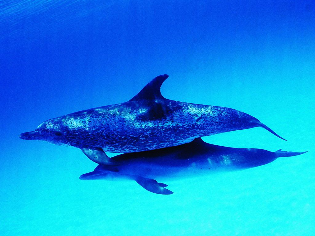 Related wallpapers animals dolphins dolphin 1024x768