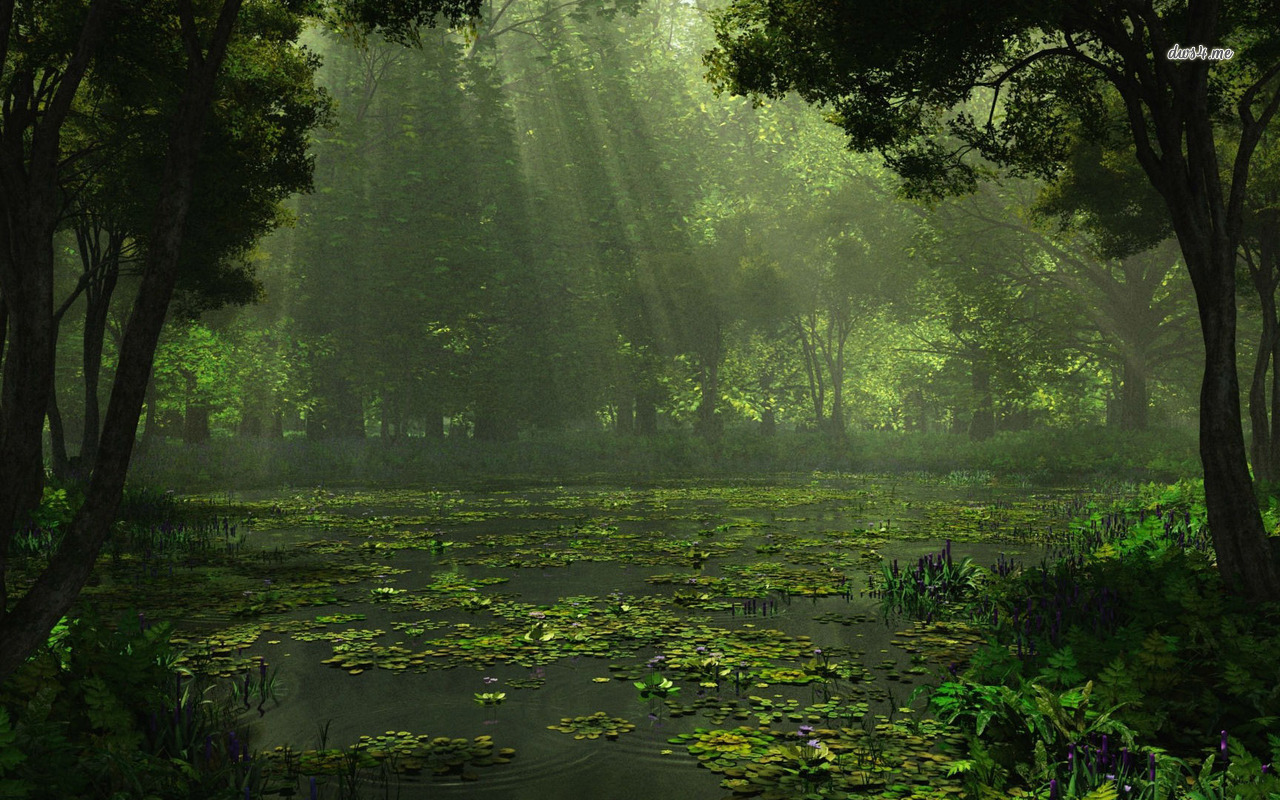 Sunlit swamp wallpaper   Nature wallpapers   18330 1280x800