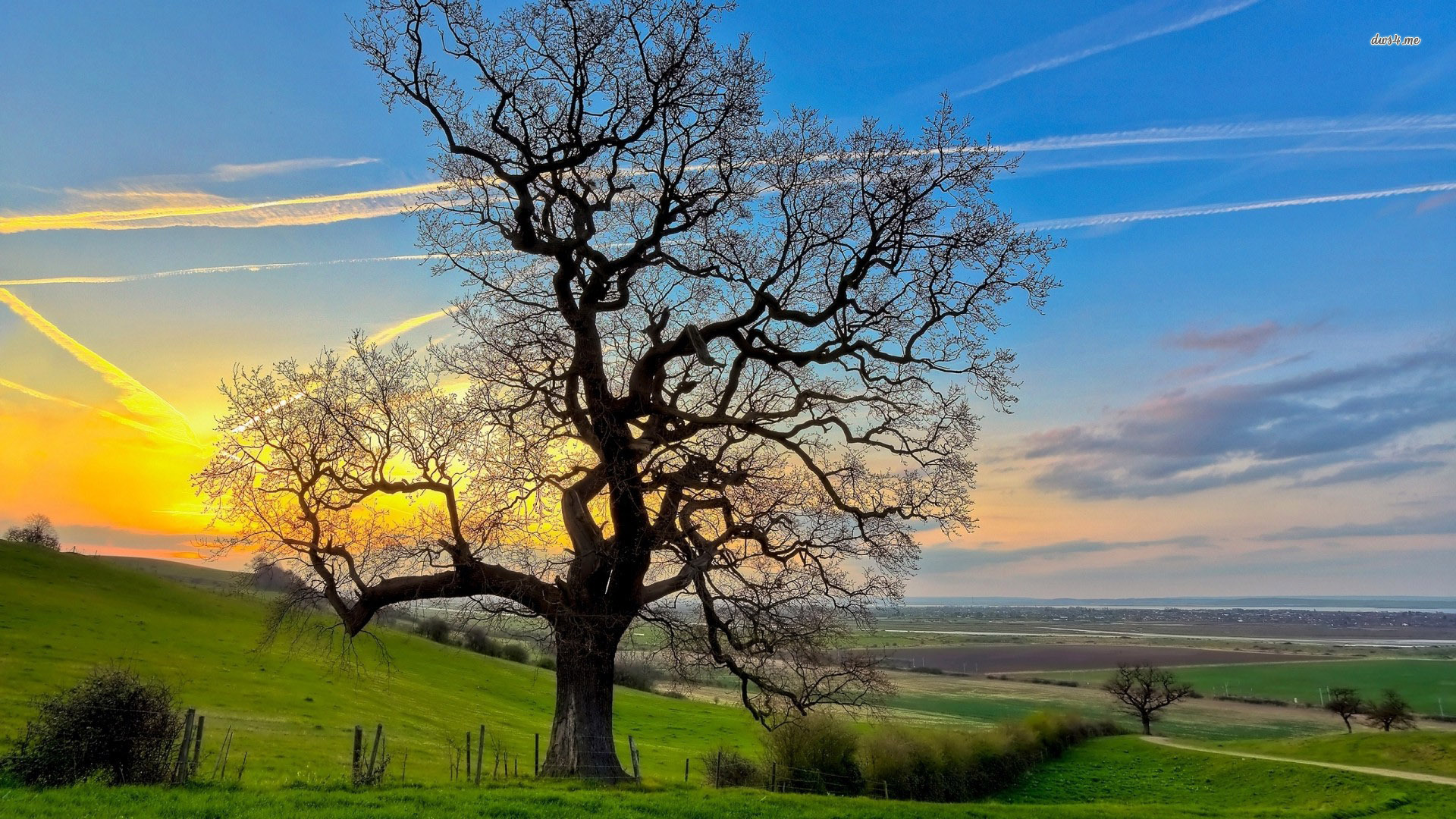 Beautiful Oak Tree wallpaper 1920x1080 29381 1920x1080