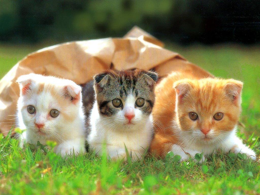 Cute and Funny Pet Wallpaper 1024x768