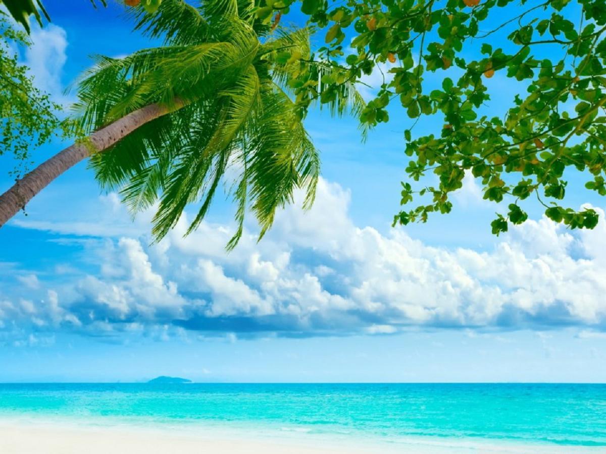 Tropical Beach Resorts wallpaper   ForWallpapercom 1200x900