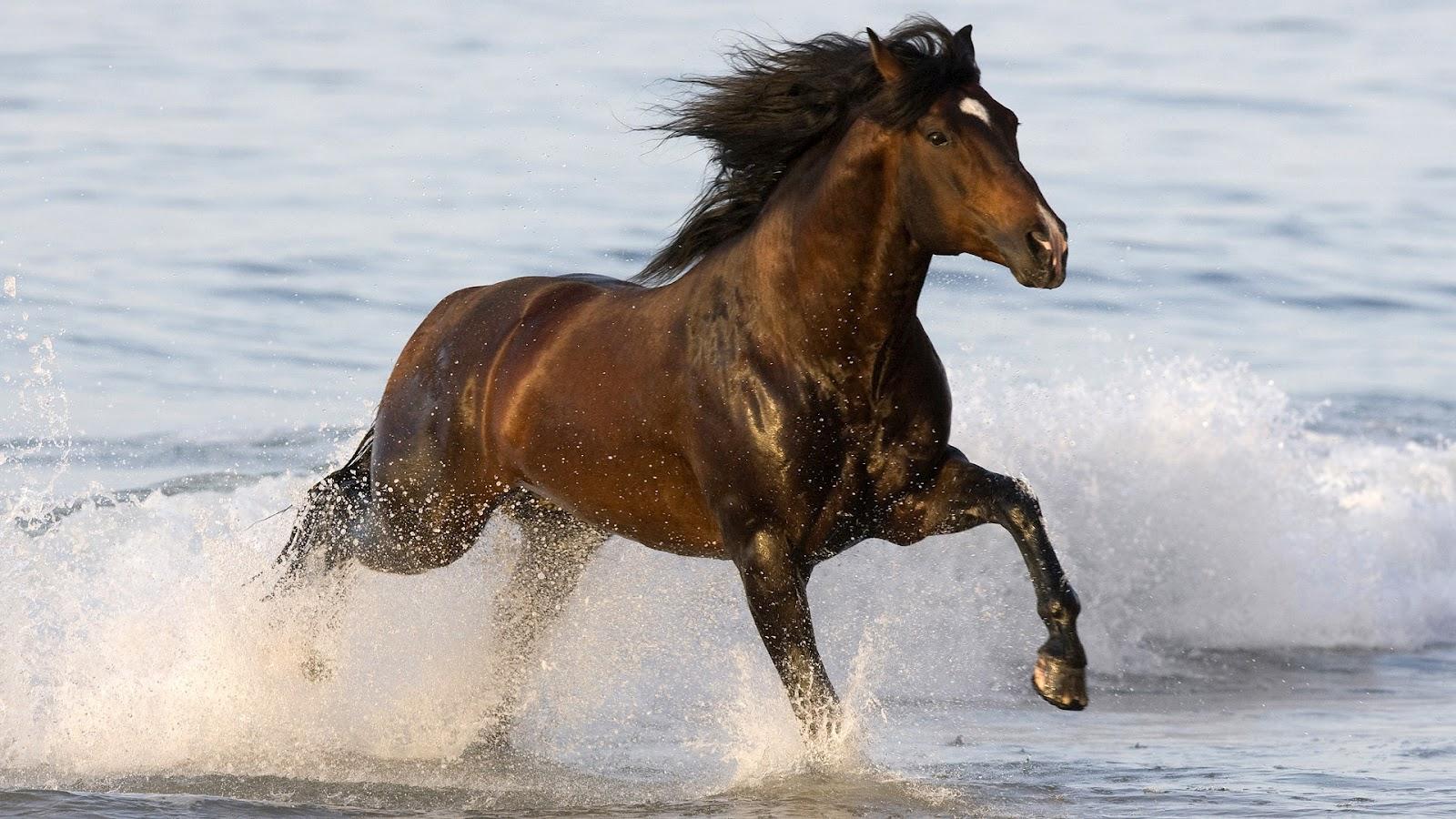 Обои для рабочего стола лошади в воде