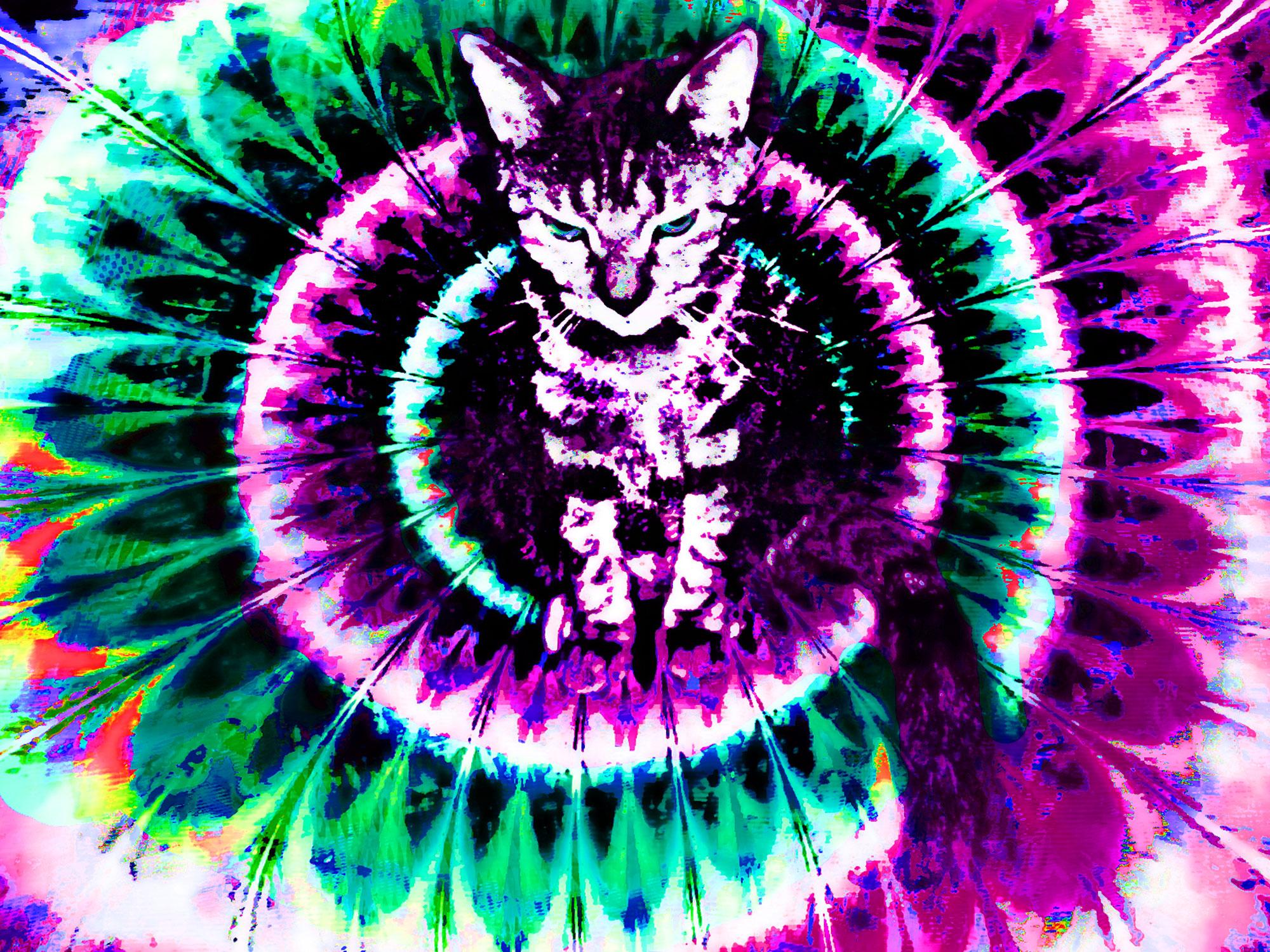 trippy cat wallpaper hd -#main