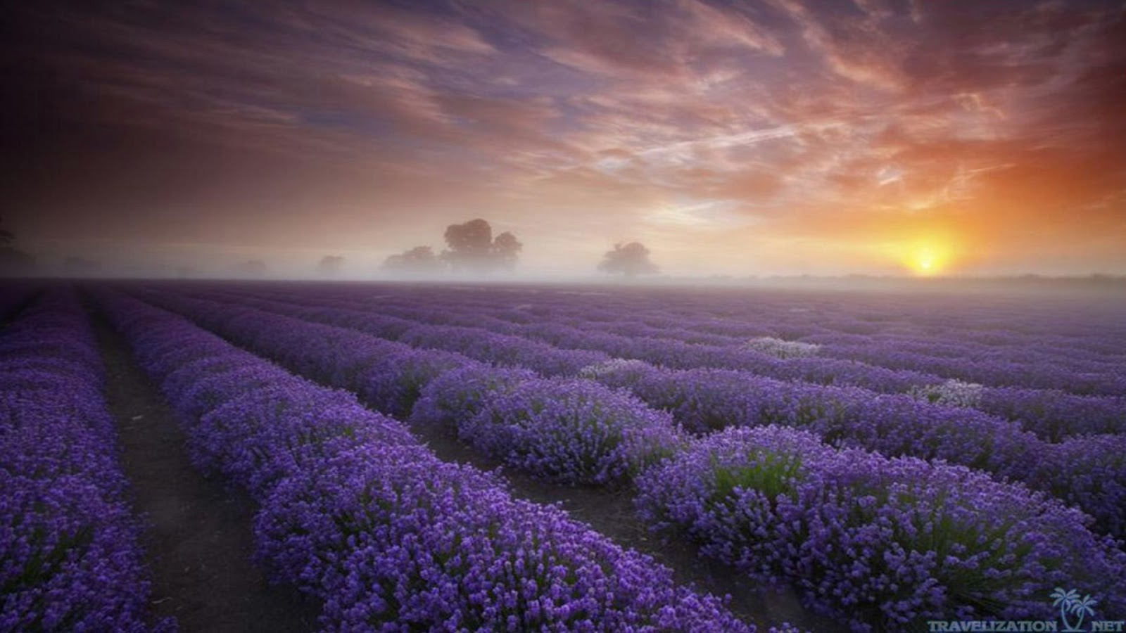 Lavender Field Wallpapers 1600x900