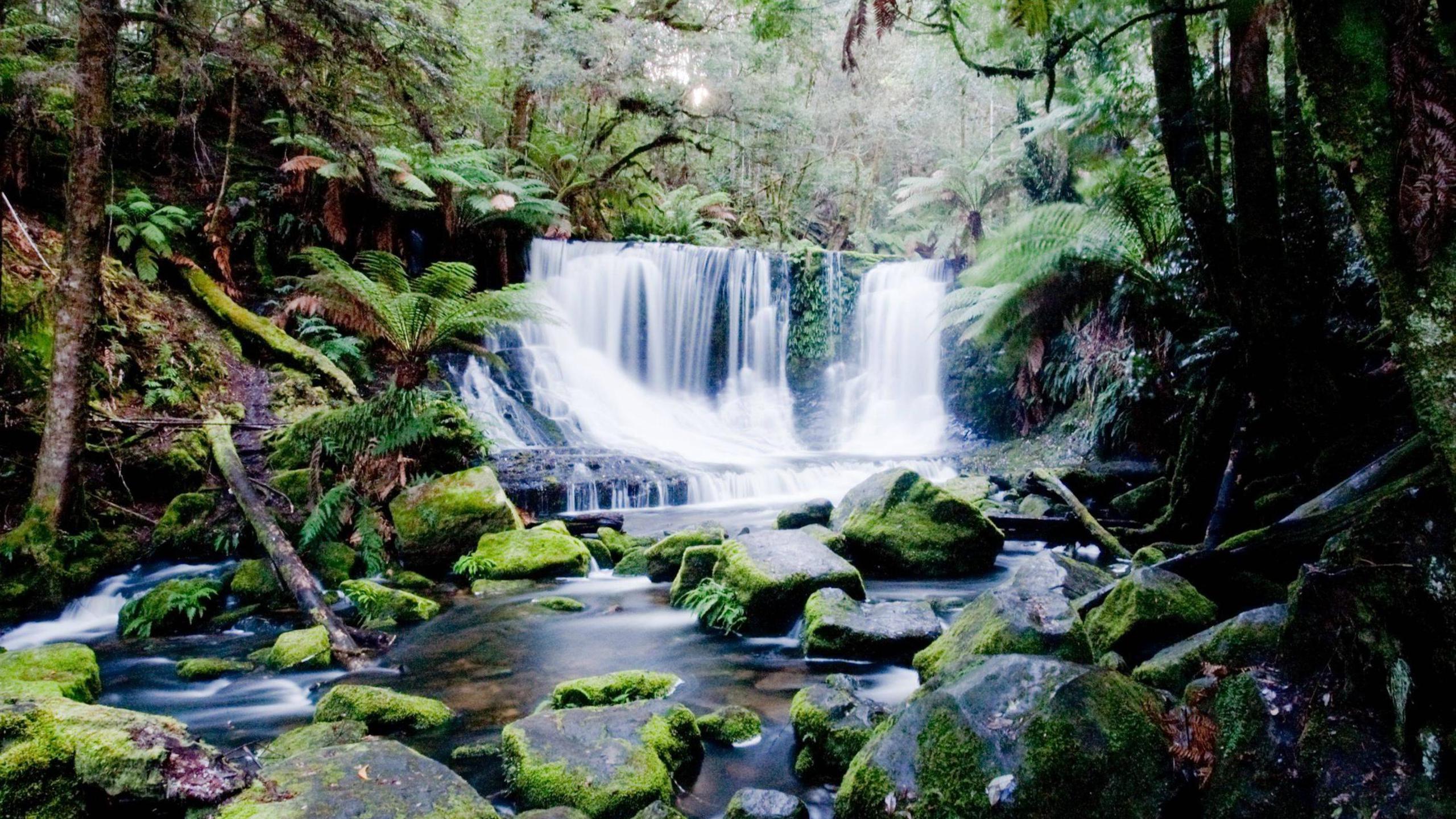 BOTPOST] Lady Barron Falls Mt Field National Park Tasmania i 2560x1440