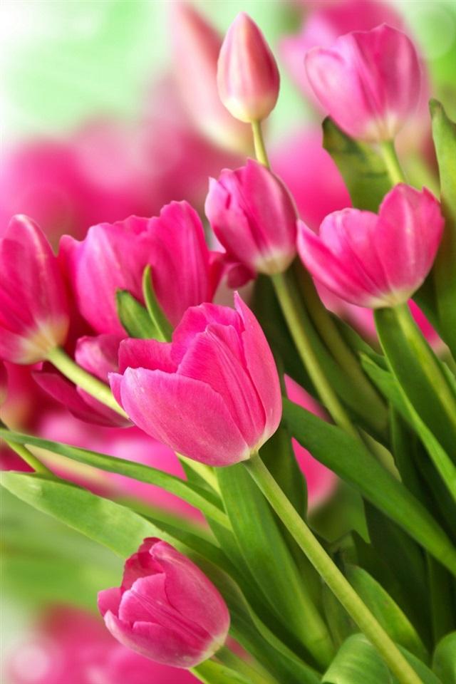 Pink Tulips Wallpaper Iphone Pink flowers bouquet tulips 640x960