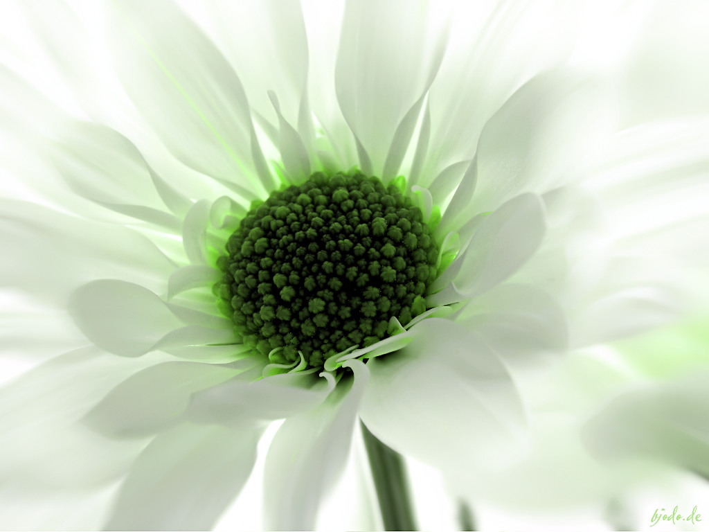 Green Flowers Wallpaper   All Wallpapers New 1024x768