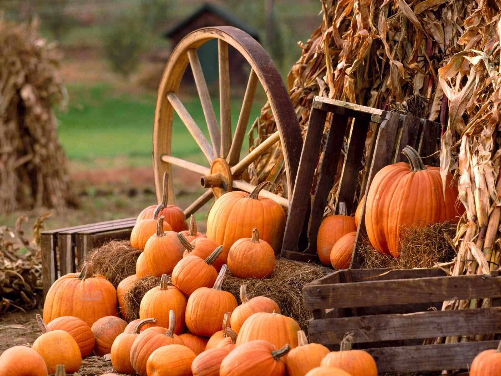 Download Fall Pics Wallpaper 46   Wallpaper For your screen 1600x1200