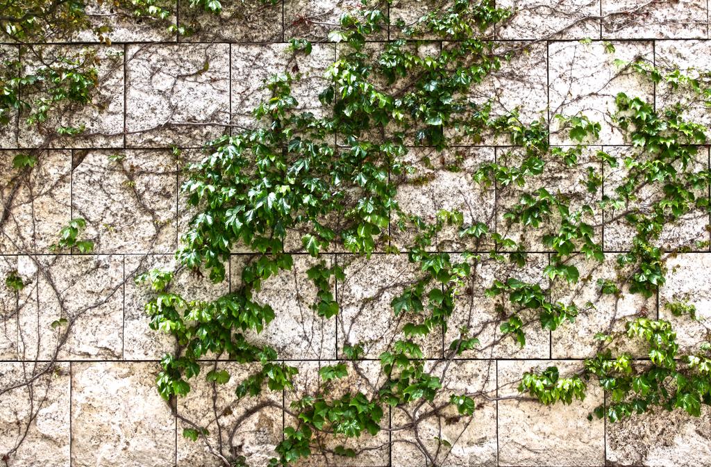 Ivy And Stone Wallpaper Wallpapersafari