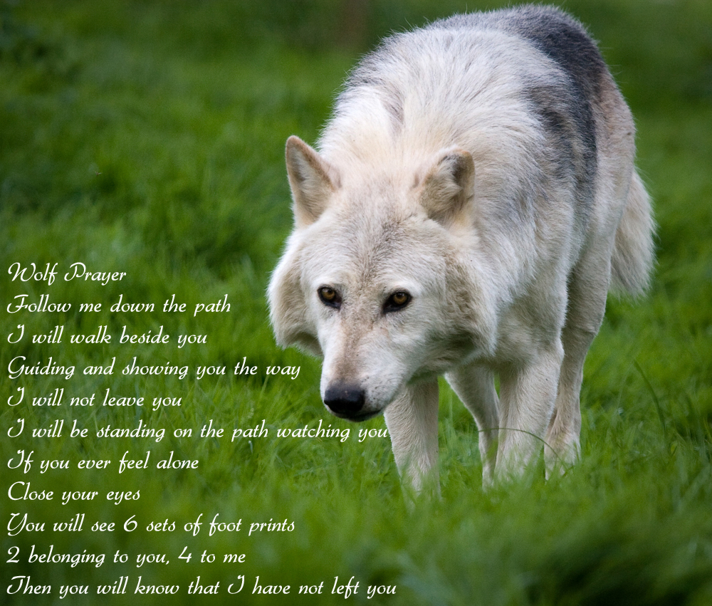 Wolves Wolf Prayer Wallpaper 1000x851