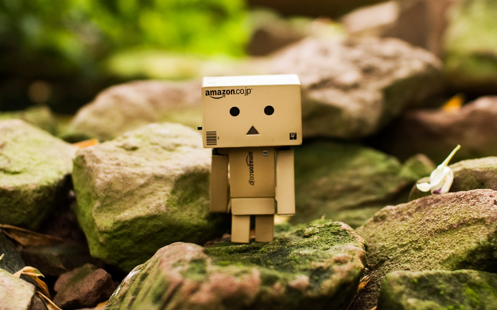Free Download Boy Yellow Danboard Danbo Little Box Amazon Hd