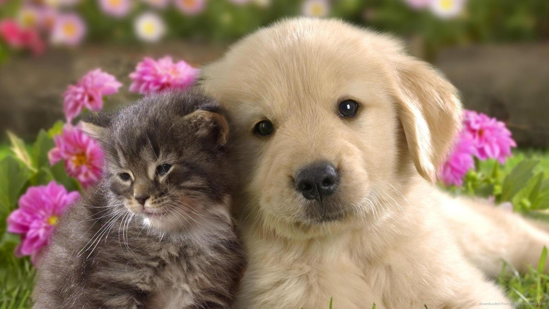 animals cute dogs puppies puppy related wallpapers 1920x1080