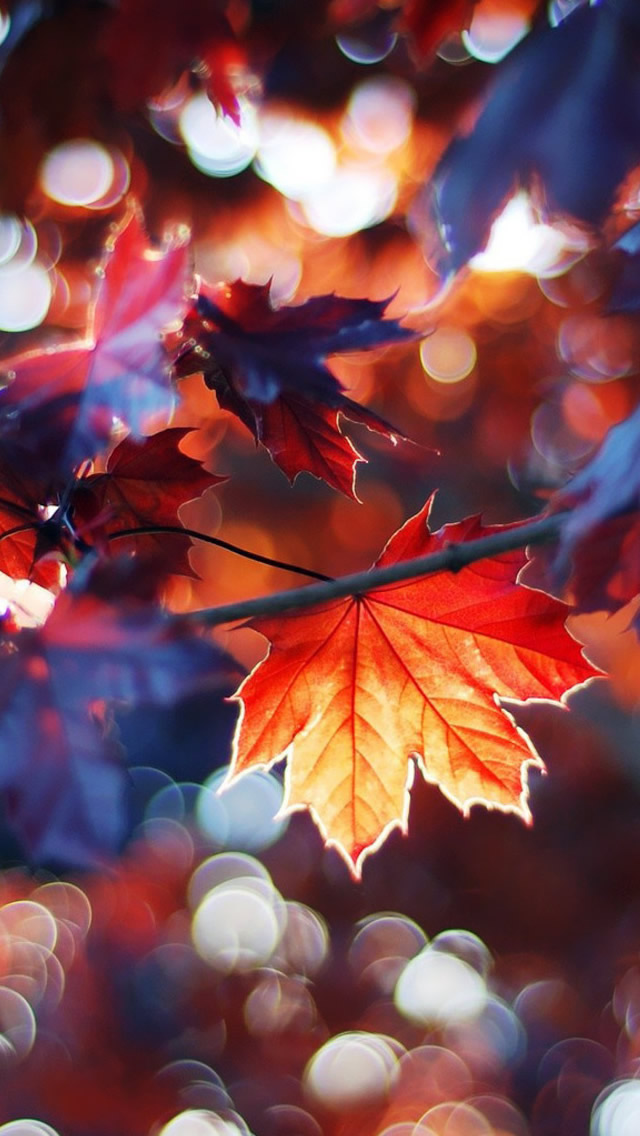 Autumn Leaves iPhone 5s Wallpaper Download iPhone Wallpapers iPad 640x1136