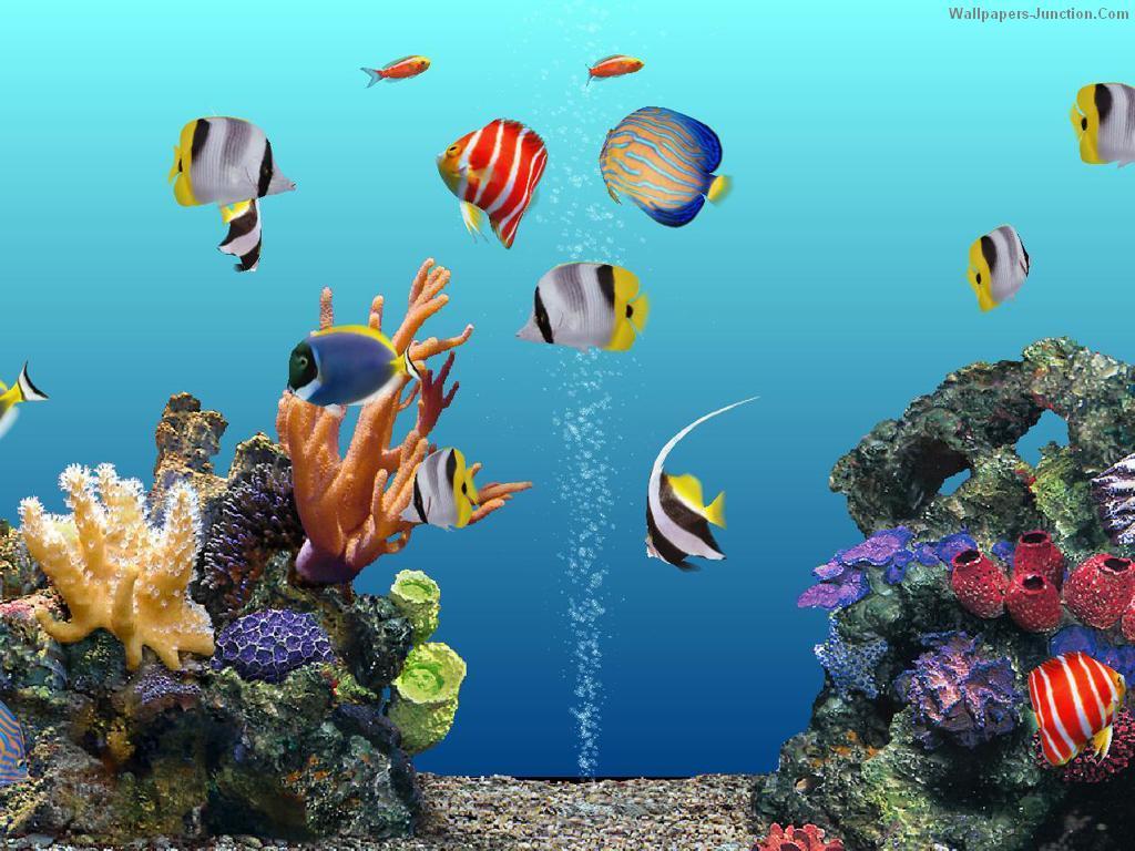 50 3d aquarium wallpaper on wallpapersafari - Fish tank screensaver pc free ...