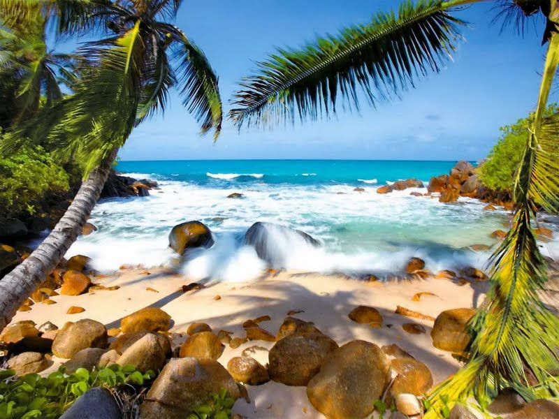 beach 5 tropical beach 6 tropical beach 7 tropical beach 8 tropical 800x600