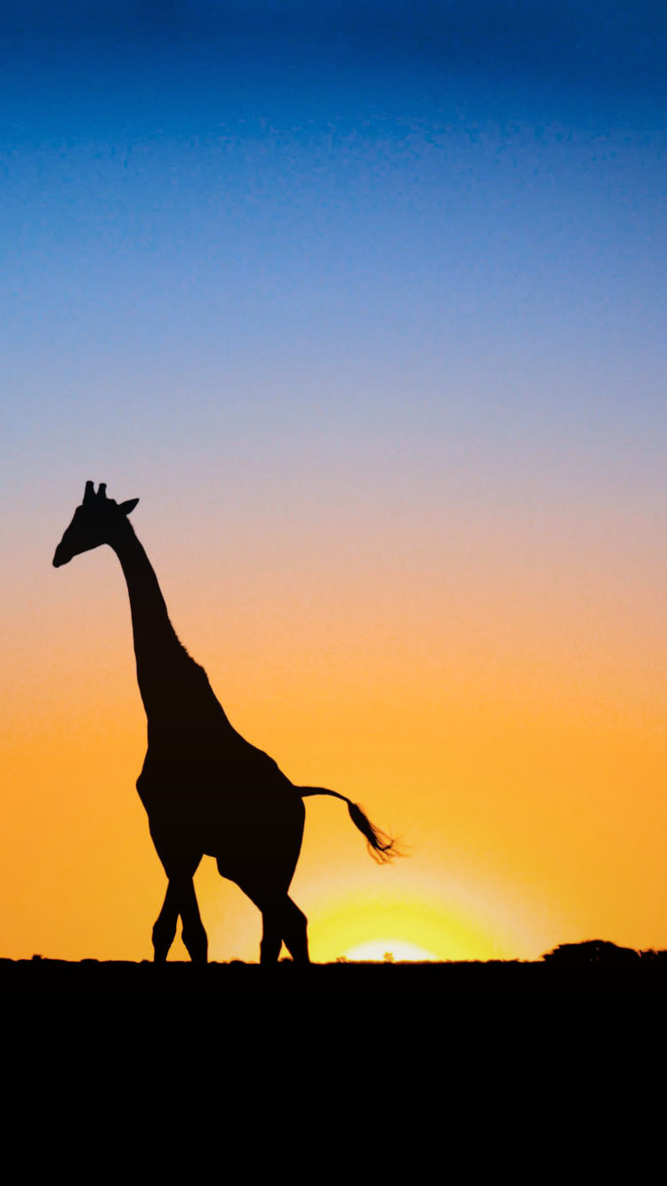 iPhone 6 Wallpapers Giraffe Sunset Phone cases 750x1334