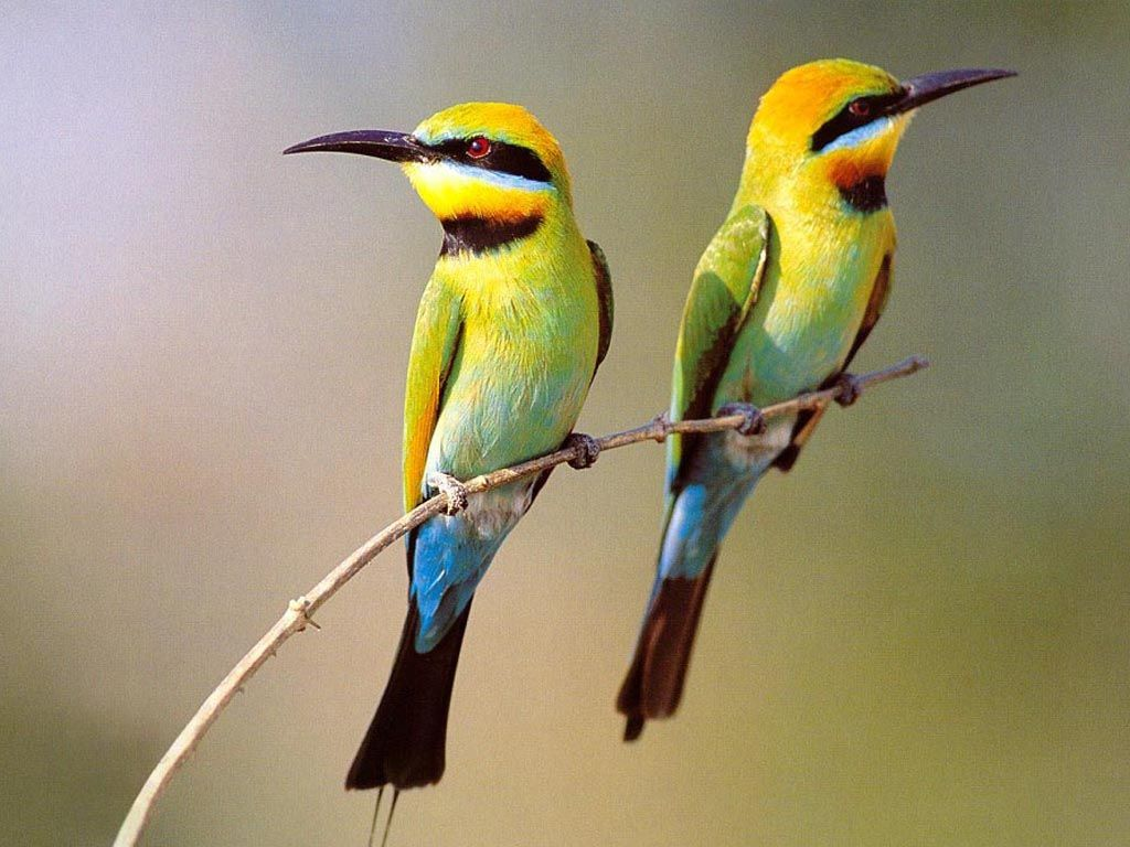 Two Small Birds On Branch Wallpaper 1024768   Birds Wallpapers 1024x768