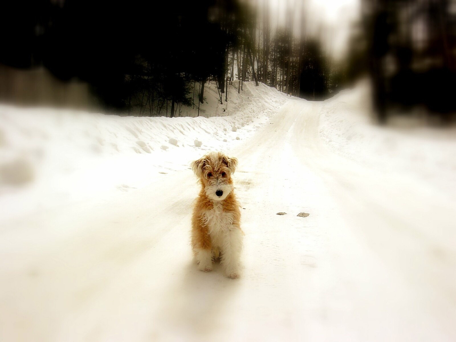 Desktop Backgrounds // Animal Life // Dogs | Puppy dogs // Winter ...