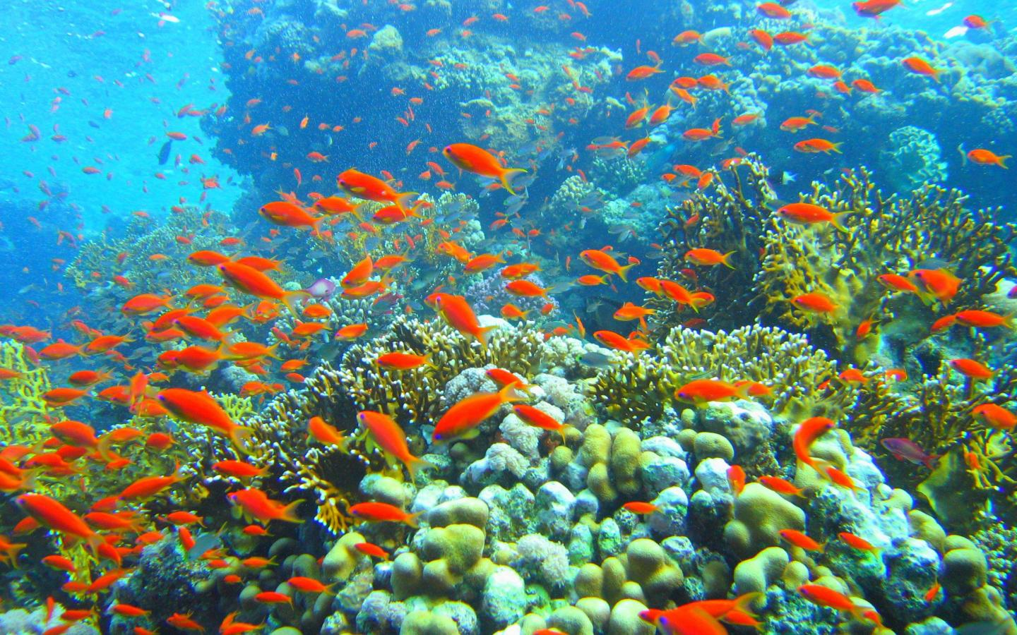 reef and fish   95851   High Quality and Resolution Wallpapers 1440x900