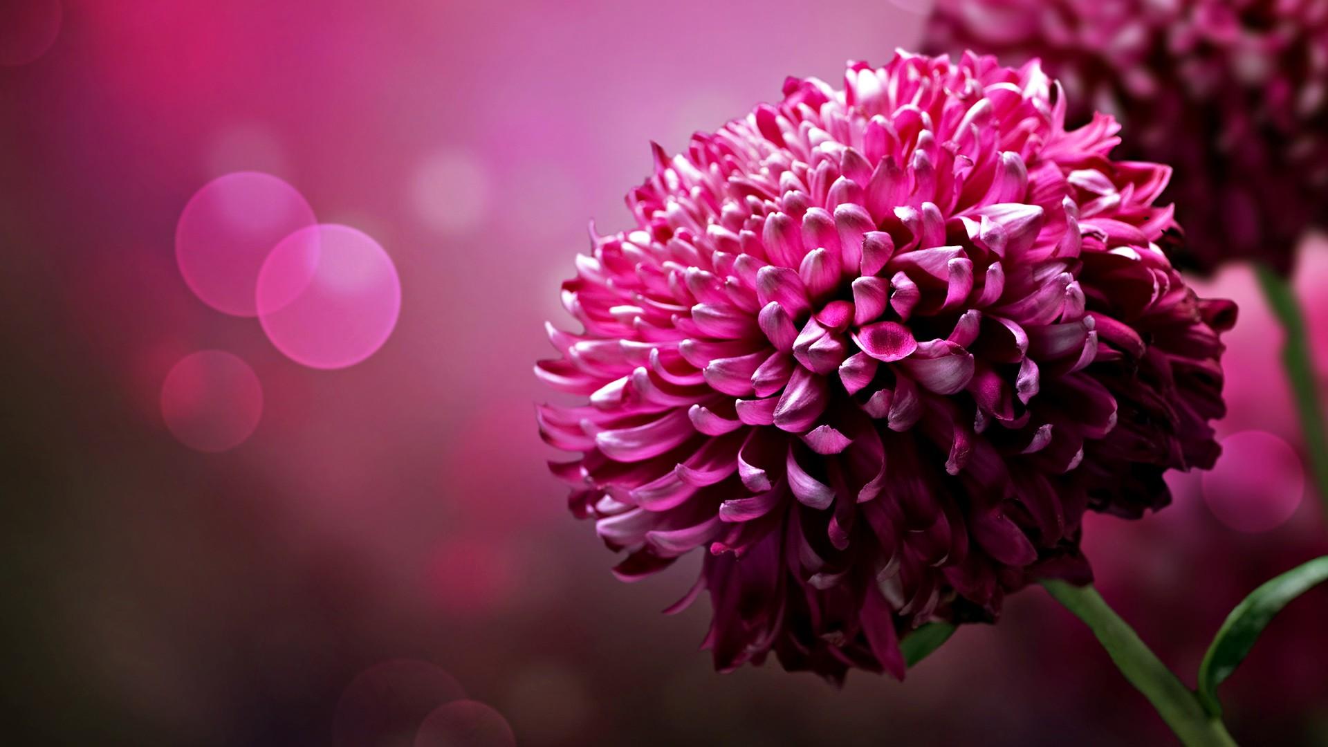 beautiful flower desktop wallpapers 1920x1080