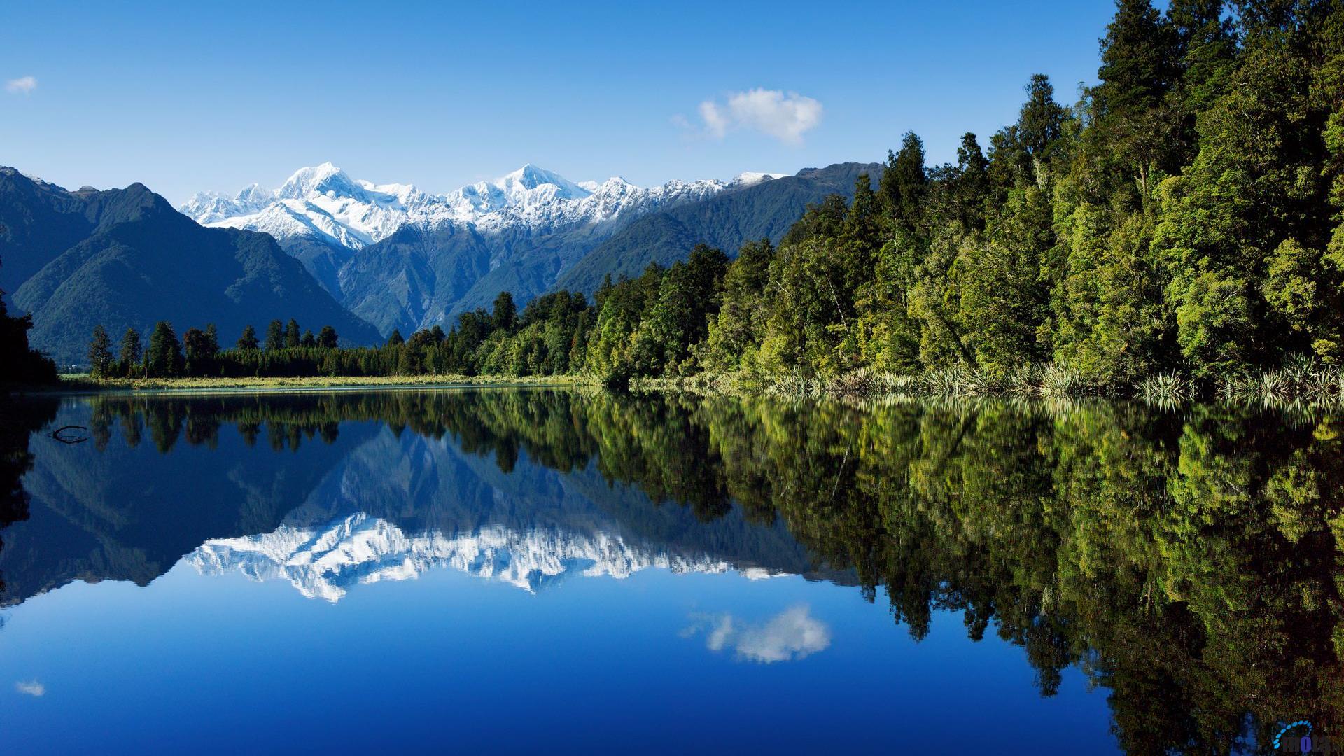 Free wallpaper background Tree Lupins Lake Hawea New Zealand