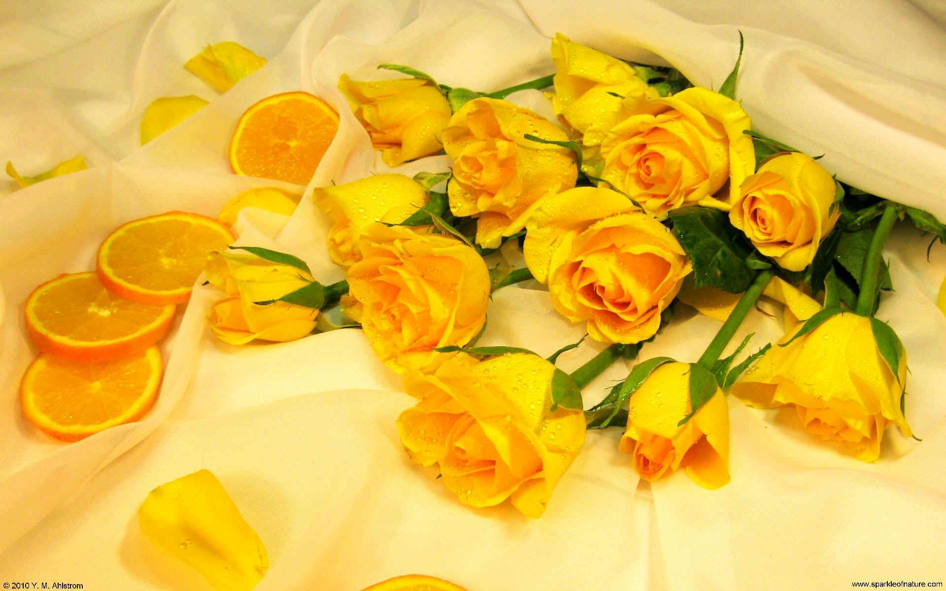 Hd wallpaper yellow rose - Wallpaper Sparkle Roses Yellow Oranges 1920x1200