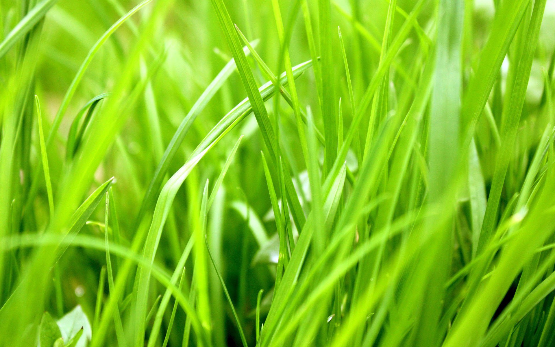 Pin Bright Green Grass Hd Wallpaper Placecom 1920x1200