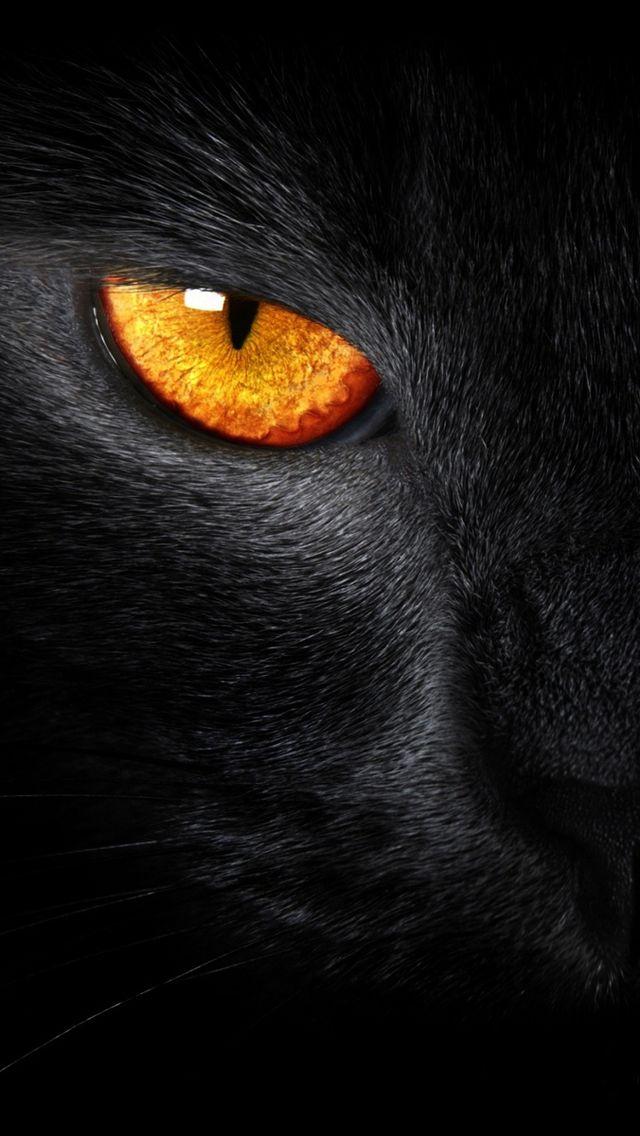 Black Cat Evil Eye iPhone 5 Wallpaper Black cat eyes Cats 640x1136