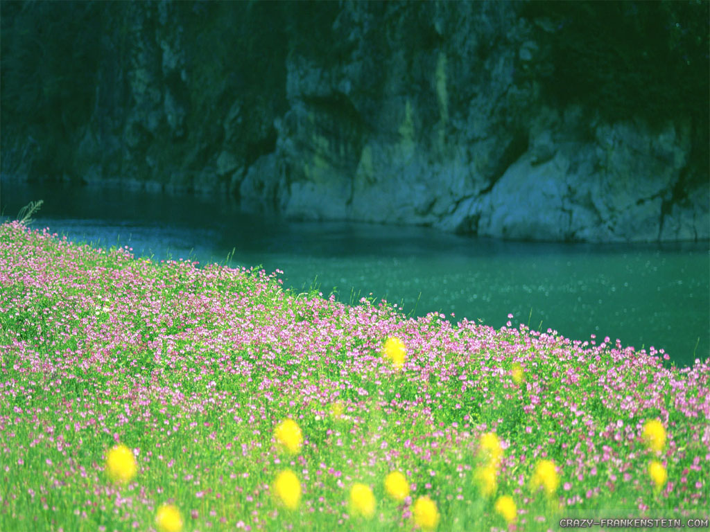 HD wallpaper Very Pretty River Flowers Summer Nature Wallpapers by 1024x768