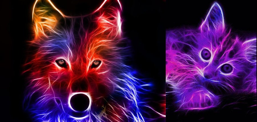 Neon Animal Backgrounds Neon Animals Anime 900x426