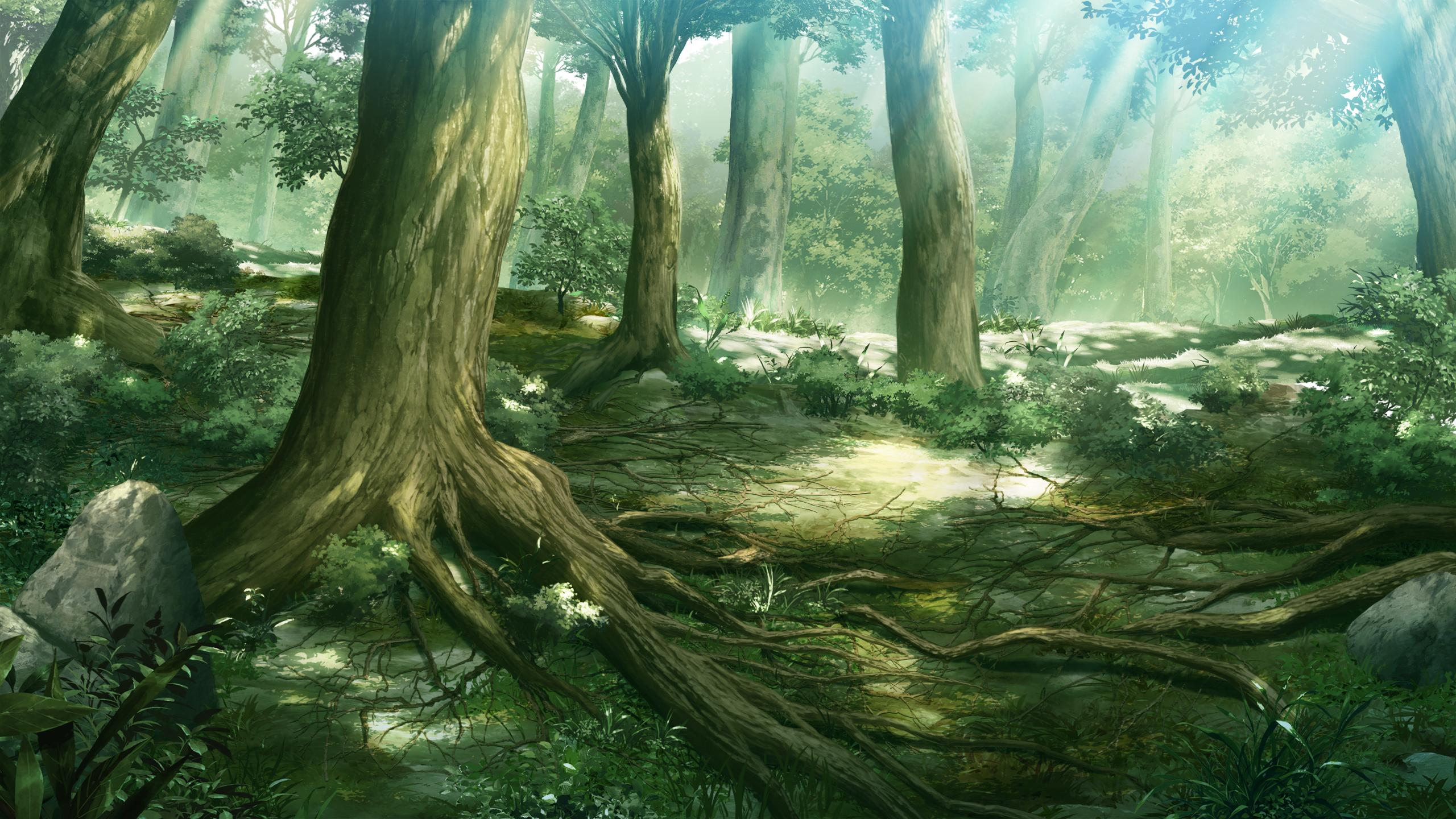 Anime Forest Backgrounds 2560x1440