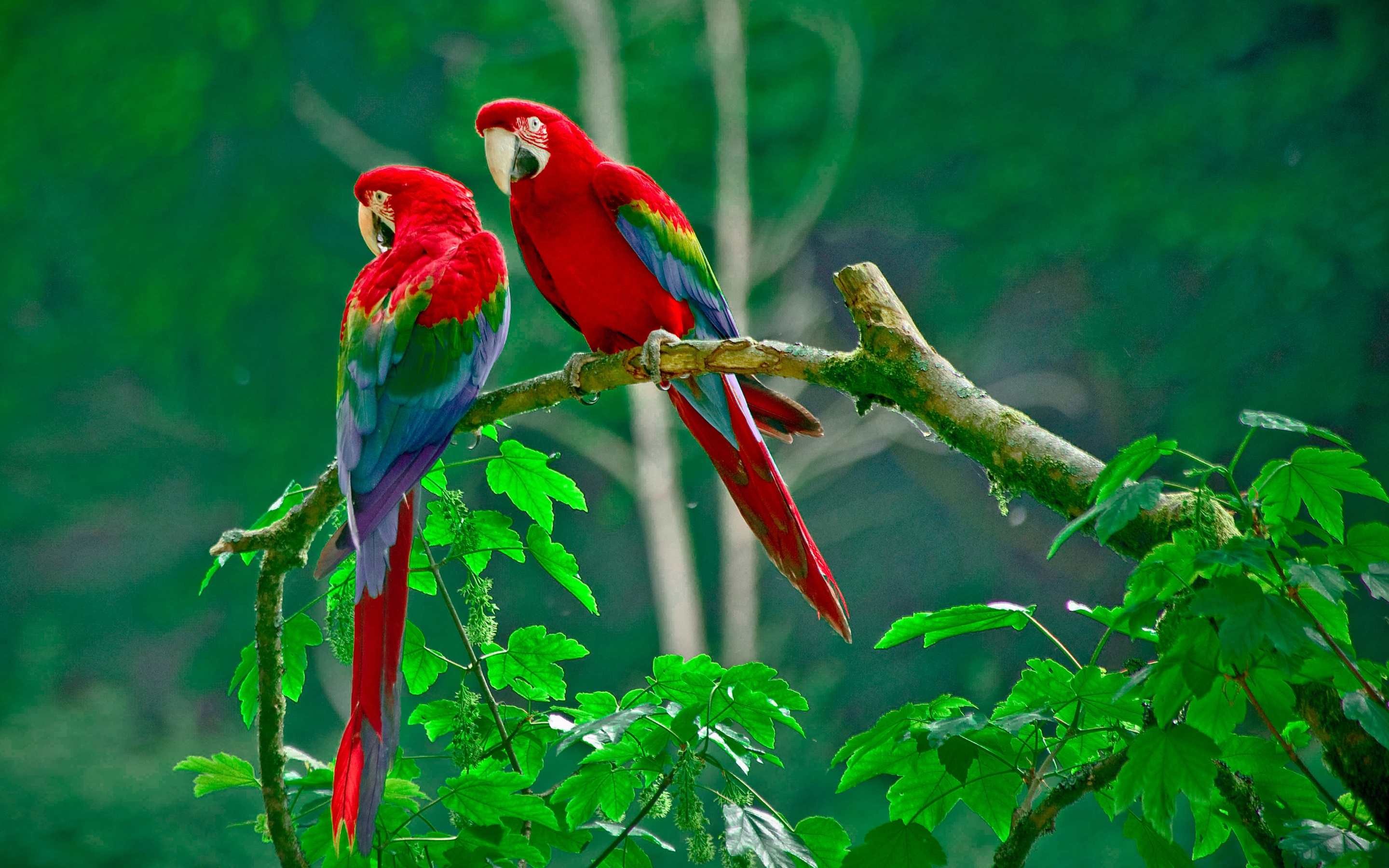 Parrots Paradise Wallpapers HD Wallpapers 2880x1800