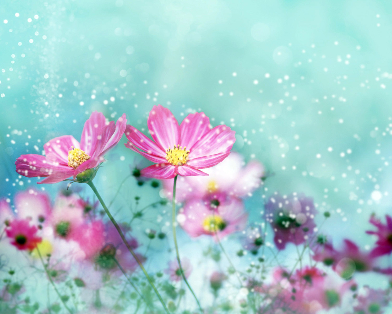 Colorful Flower Blossoms Wallpapers HD Wallpapers 1280x1024
